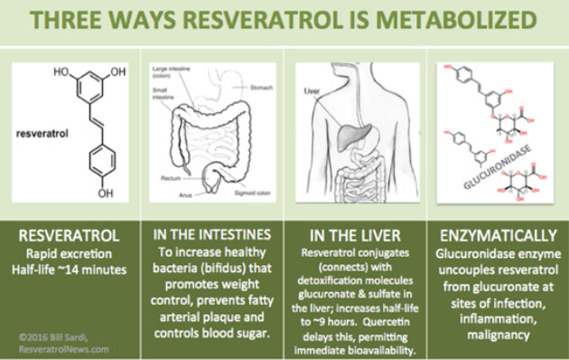 Three Ways Resveratrol is Metabolized
