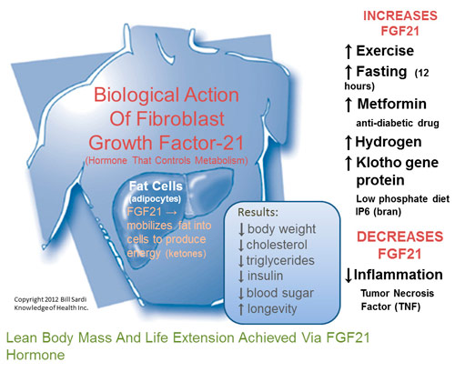 http://knowledgeofhealth.com/wp-content/uploads/2012/10/fgf21_hormone.jpg