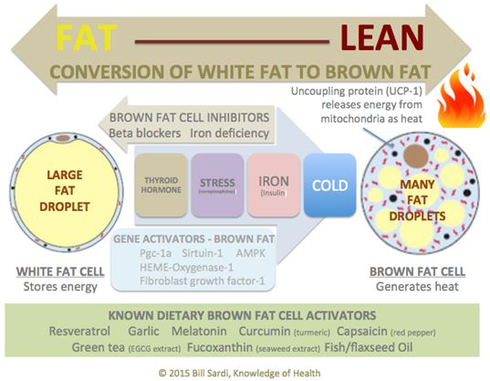 Conversion of white fat to brown fat
