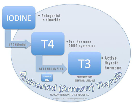 Chart: Iodine and Thyroid hormones