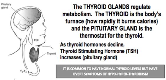 Thyroid Hormone Basics