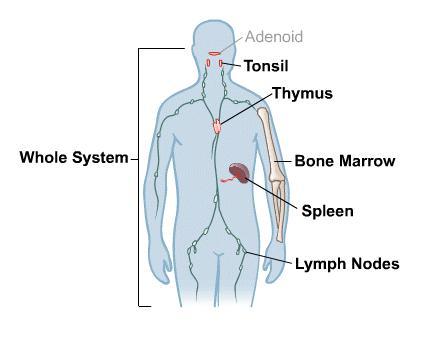 Body: immune system