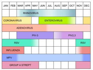 Table: Coronavirus cycle
