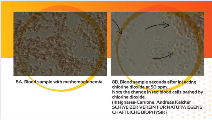 Comparison: blood sample - chlorine-dioxide injection